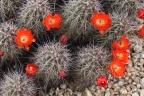 Desert Flowers: A Bumper Crop Year