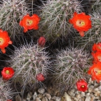 Desert Flowers: A Bumper Crop Year