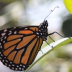 Things Unseen – Mystery of the Monarch
