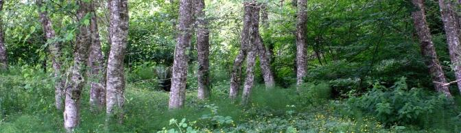 (c)speganyaldergrove.jpeg